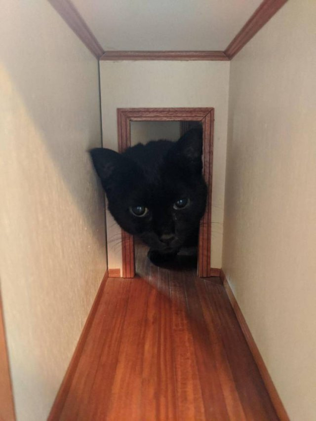 Кот в миниатюрном домике