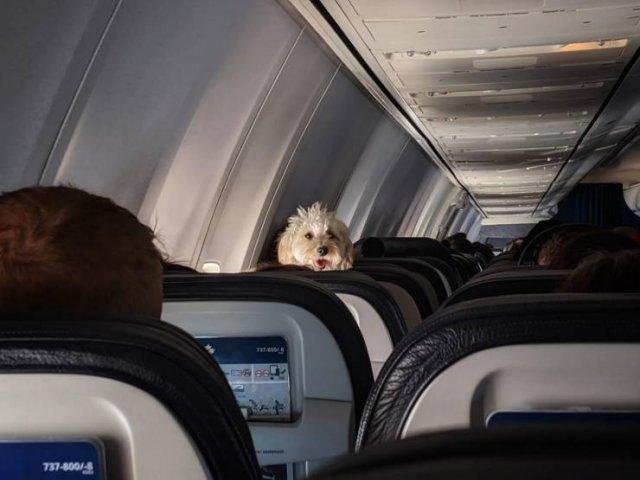 Собака в самолете