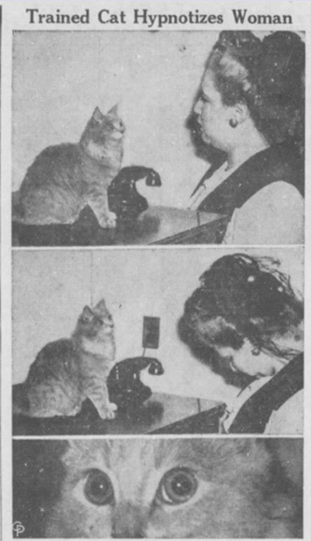Кошка Паффи, которой приписывали введение более 300 человек в гипнотический транс своими огромными немигающими глазами, 1944 год
