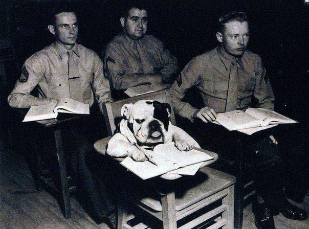 Рядовой Джиггс (талисман корпуса морской пехоты) во время занятия в школе морпехов в Вирджинии. США, 1954 год