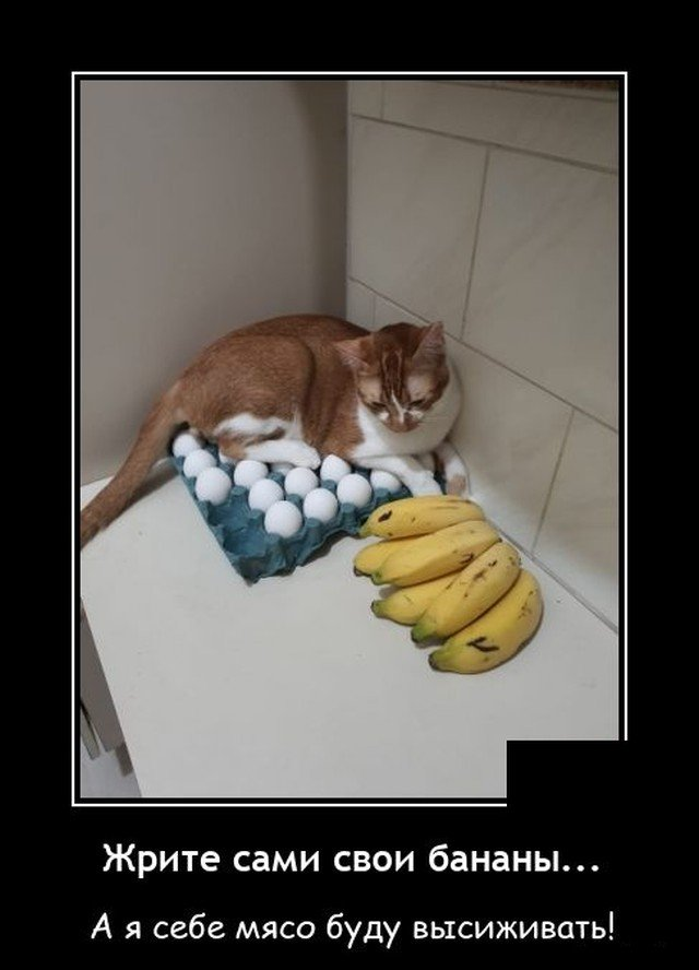 Демотиватор про кота
