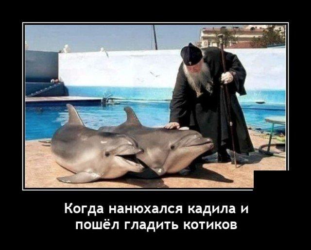 Демотиватор про дельфинов
