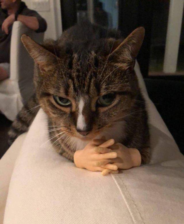 Кот с ручками