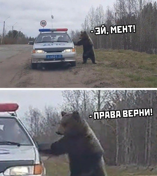 Медведь и ДПС