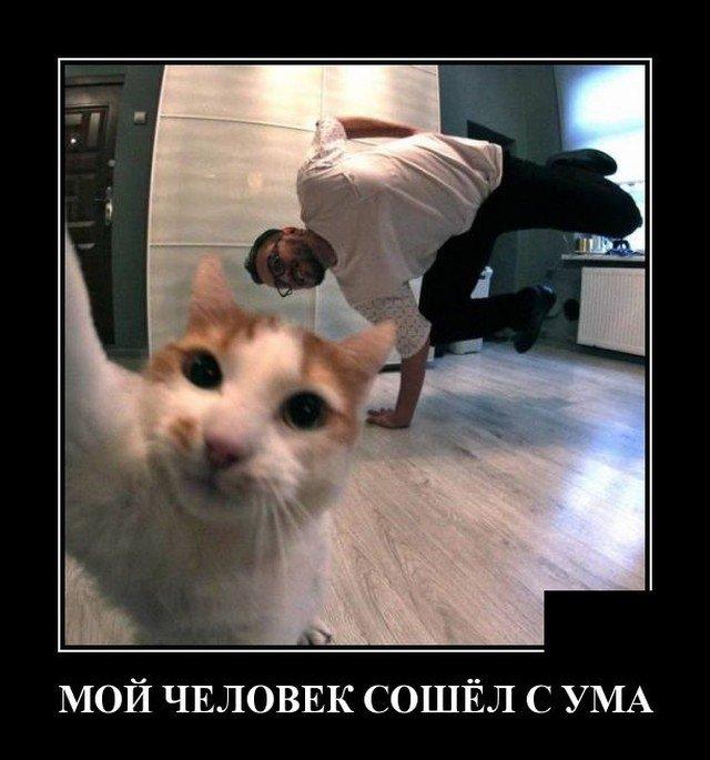 Демотиватор про кота и хозяина