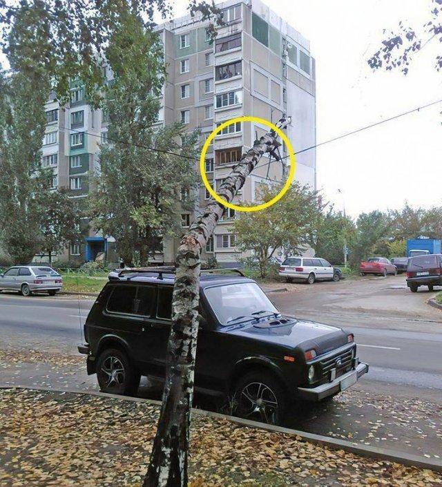 203365_25_trinixy_ru.jpg