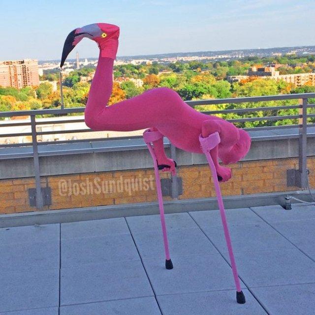 Год спустя стал уже фламинго