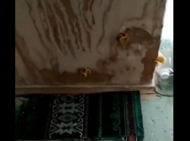 В одной из школ ДНР ученики заметили грибы на стенах