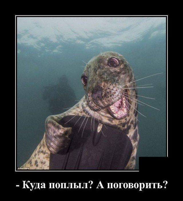 Демотиватор про морских котиков