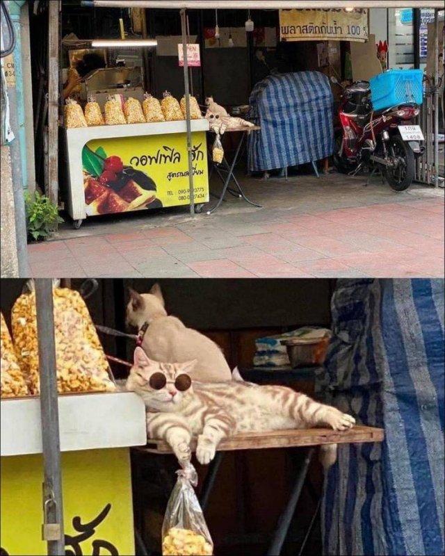 Кот-торговец