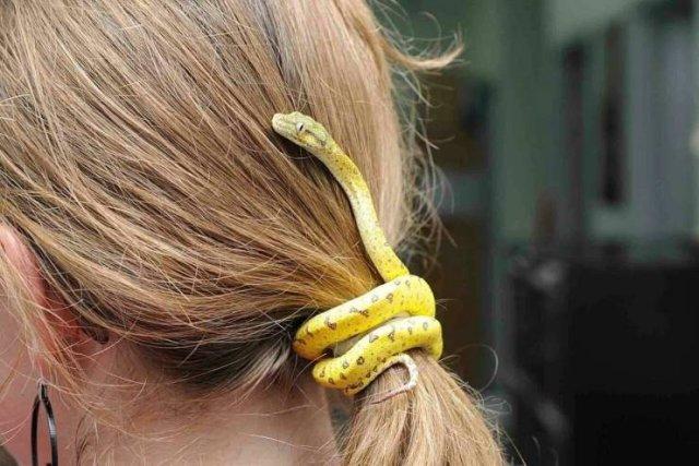Змея в волосах