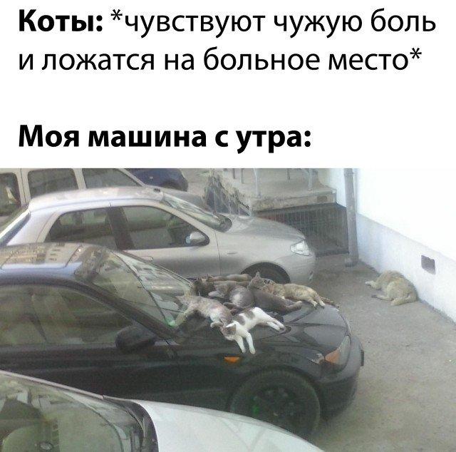Моя машина и коты утром