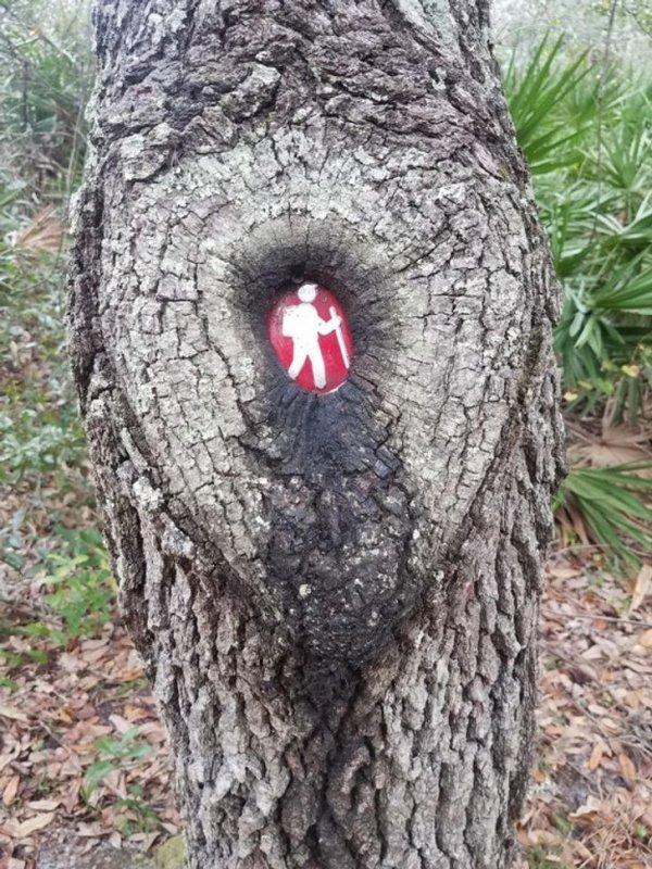 Дерево поглотило знак