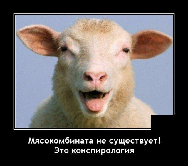 Демотиватор про овец