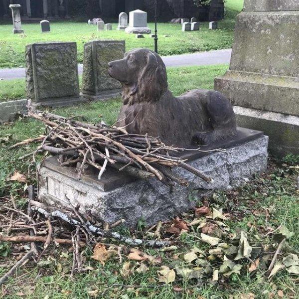 Это 100-летняя могила с памятником собаки на кладбище Грин-Вуд в Бруклине