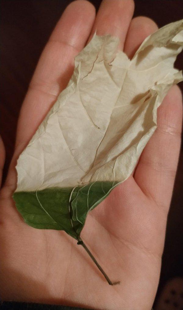 Лист, который застрял в закрытом окне