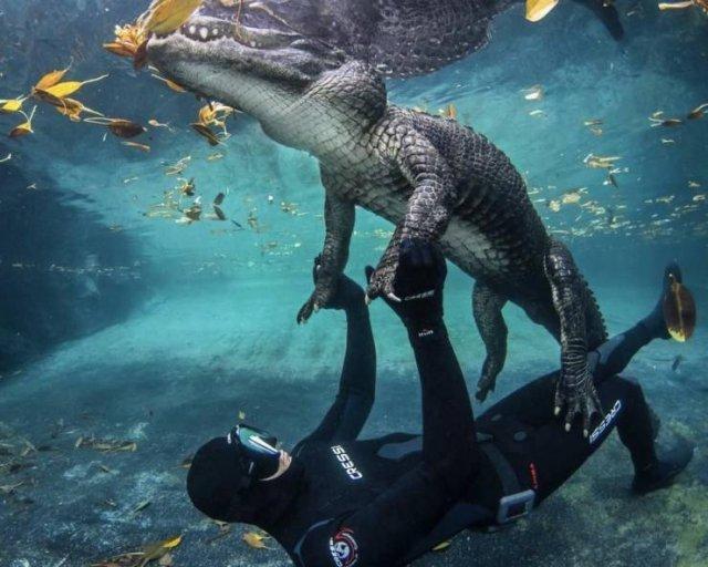 Крокодил и дайвер
