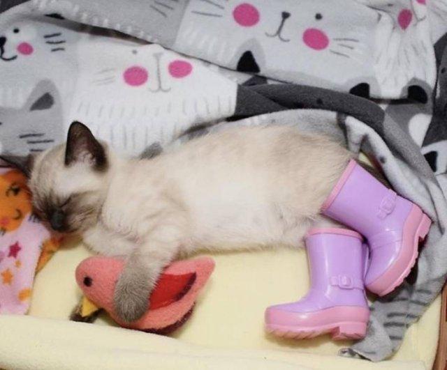 Котенок в сапогах