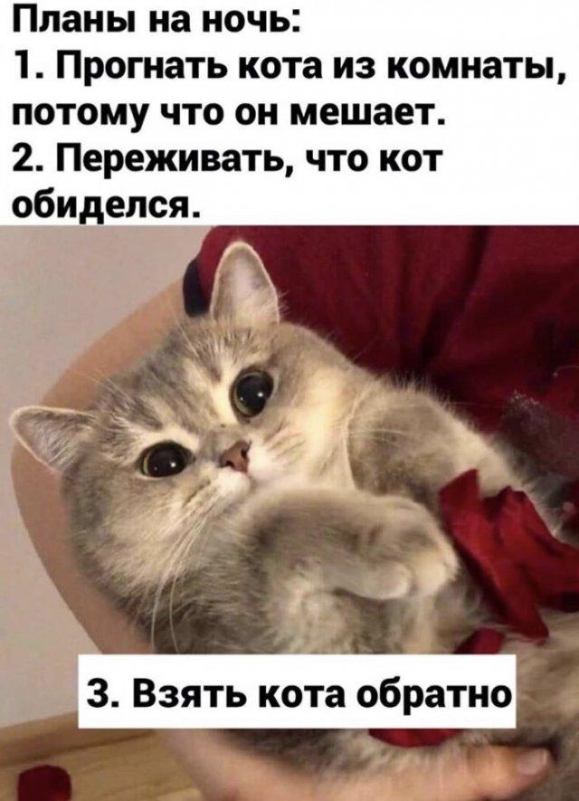 Шутки про кота