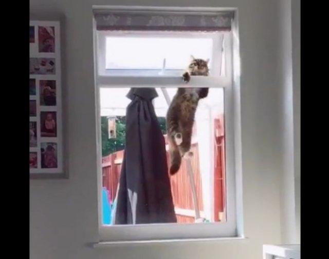 Кот изо всех сил пытается залезть в окно чужой квартиры