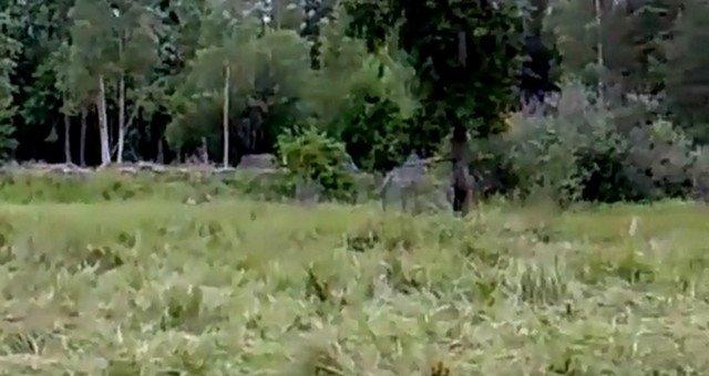 Маскировка в лесу