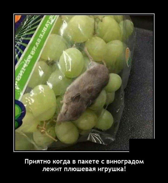 Демотиватор про мышь