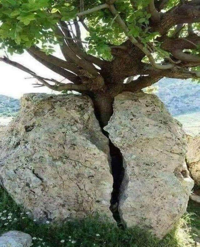 Дерево разломило камень