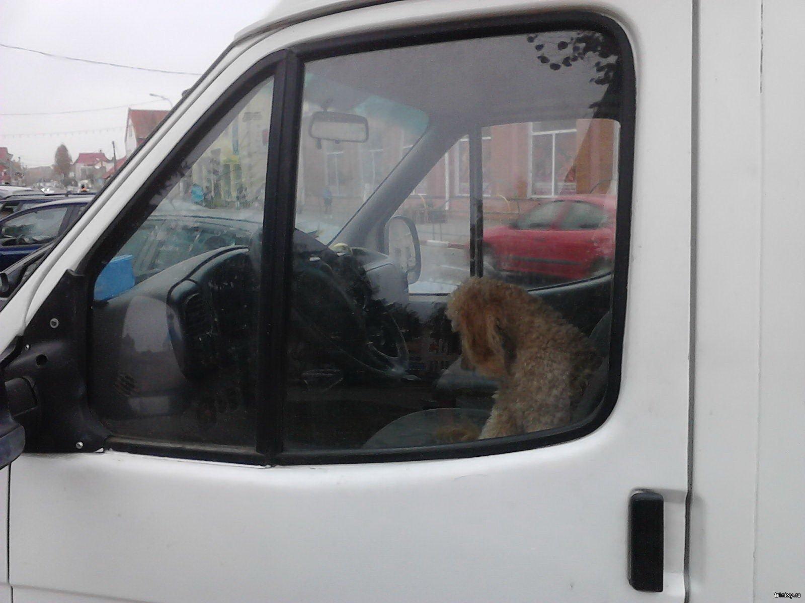 Кто сказал, что бедно живем? У нас любая собака может позволить себе автомобиль!
