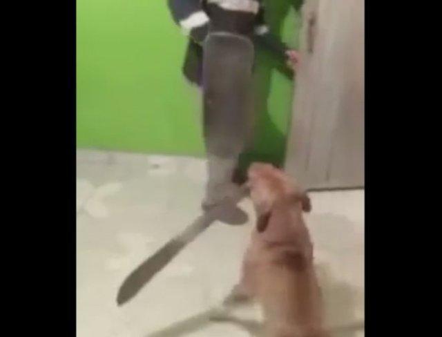 Собака с мачете против человека со скейтбордом