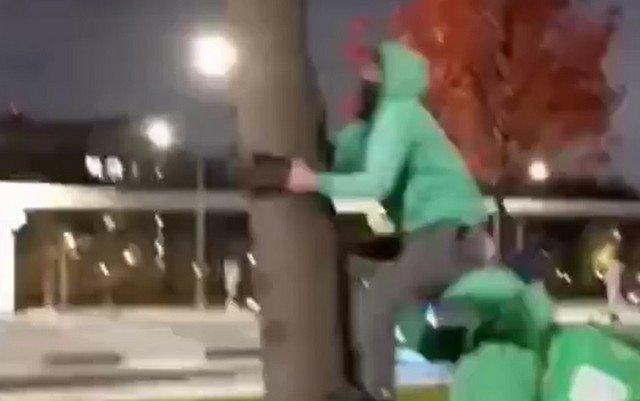 Доставщик еды залезает на дерево