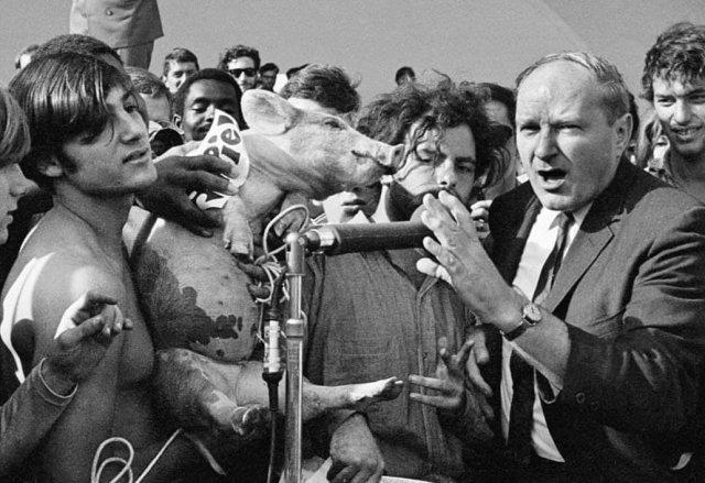 Дэвид Деллинджер и Джерри Рубин выдвигают свинью на пост президента в Грант-Парке, Чикаго. США.1968г.