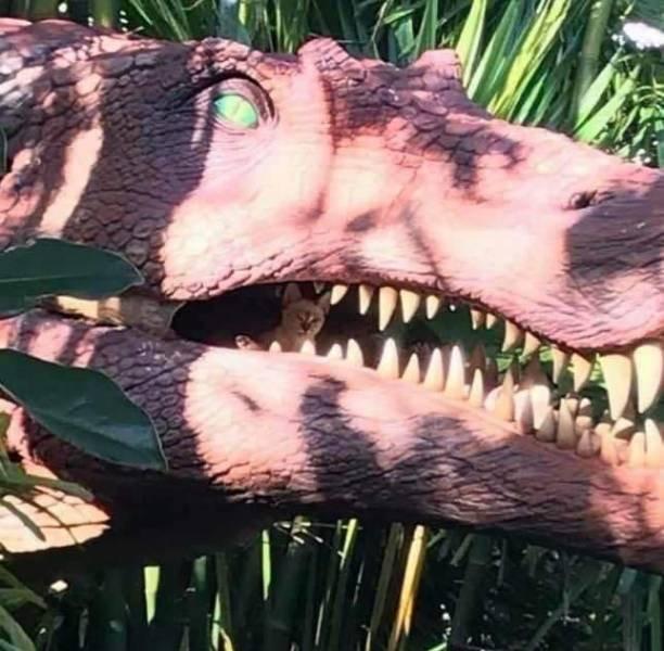 Кот в пасти у динозавра