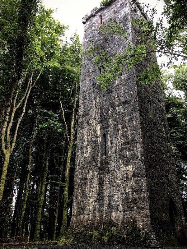 Где-то в ирландском лесу