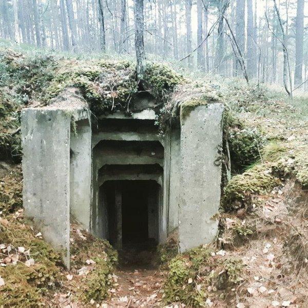 Старый бункер в лесной чаще