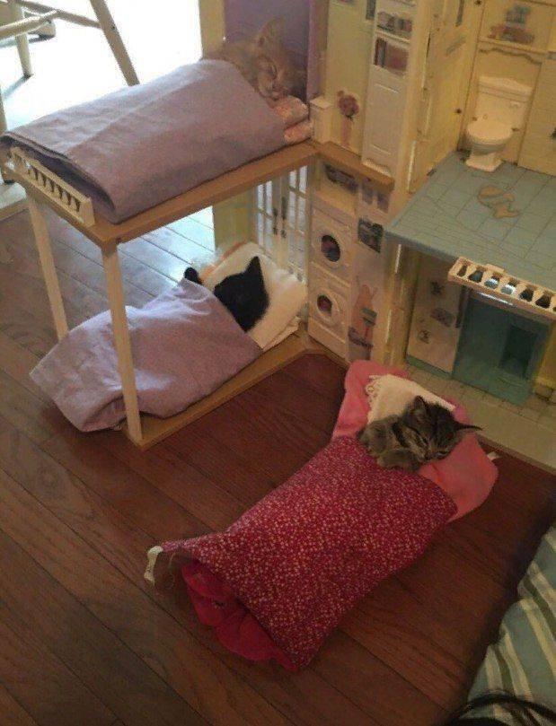 Котики в кроватках