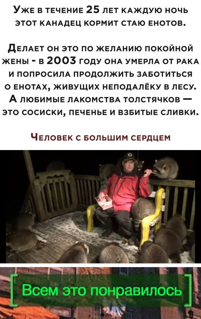 Мужчина кормит енотов