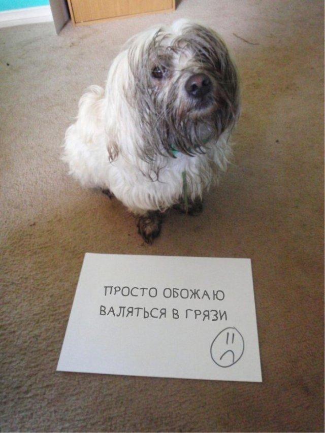 Хозяева фотографируют своих питомцев со смешными табличками, на которых написано, в чем провинились
