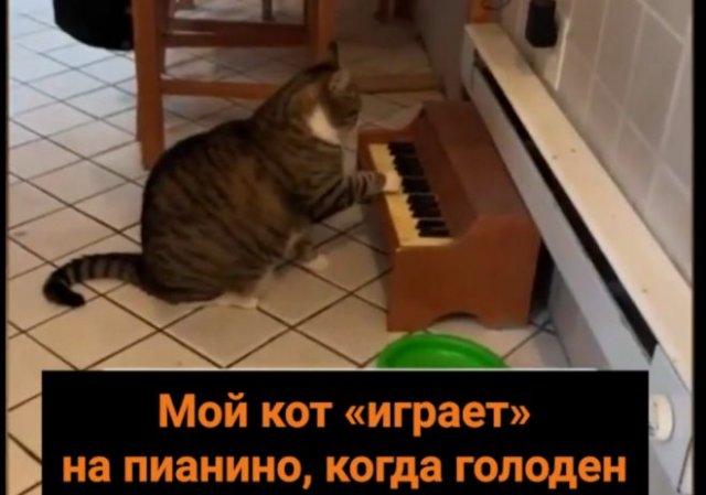Кот научился играть на пианино, выпрашивая еду
