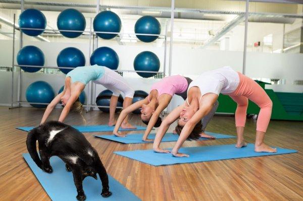 Кошачья йога