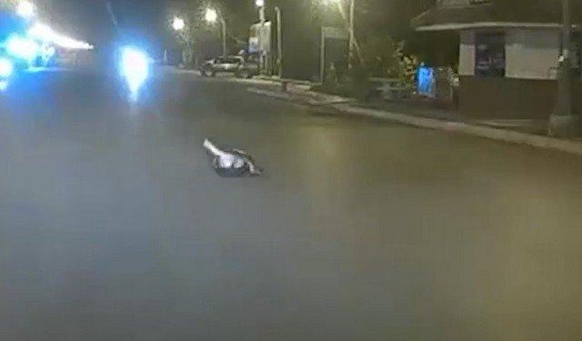 питон и кошка дерутся в таиланде