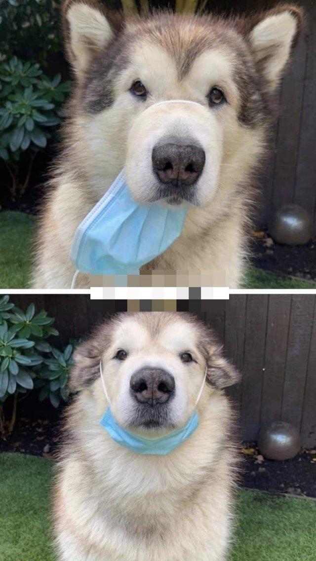 Собака и маска