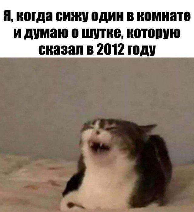 Кот и желания в 2012