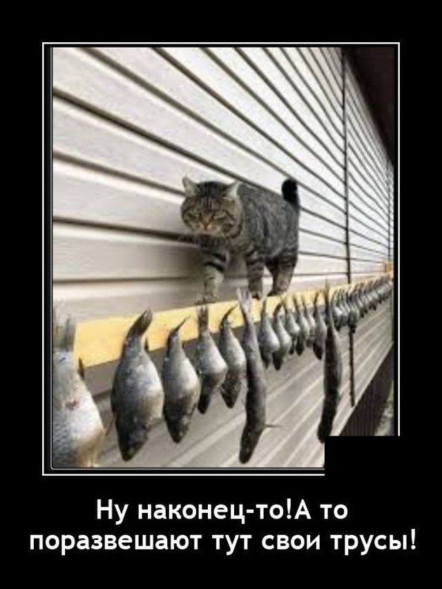 Демотиватор про кота и рыбу