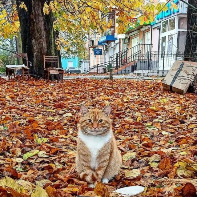 Кот осенью