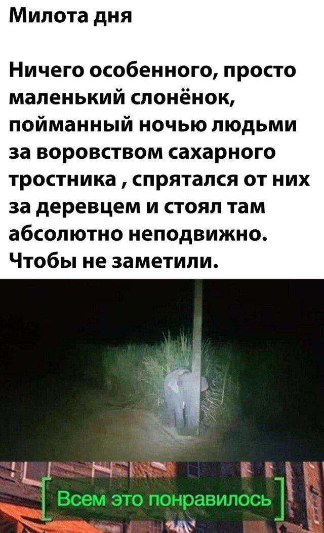 Спрятавшийся слоненок
