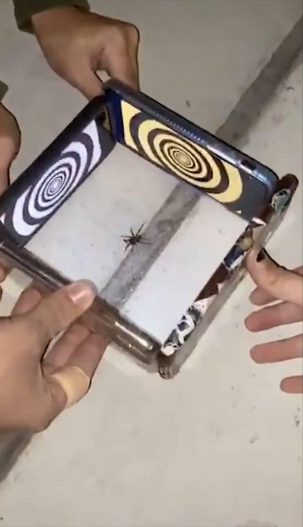 Паук и телефоны