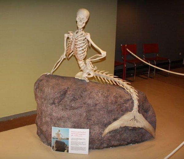 шуточный скелет русалки
