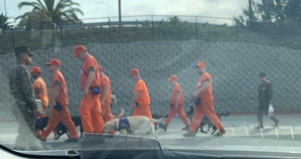 Заключённых используют для выгула собак из приюта