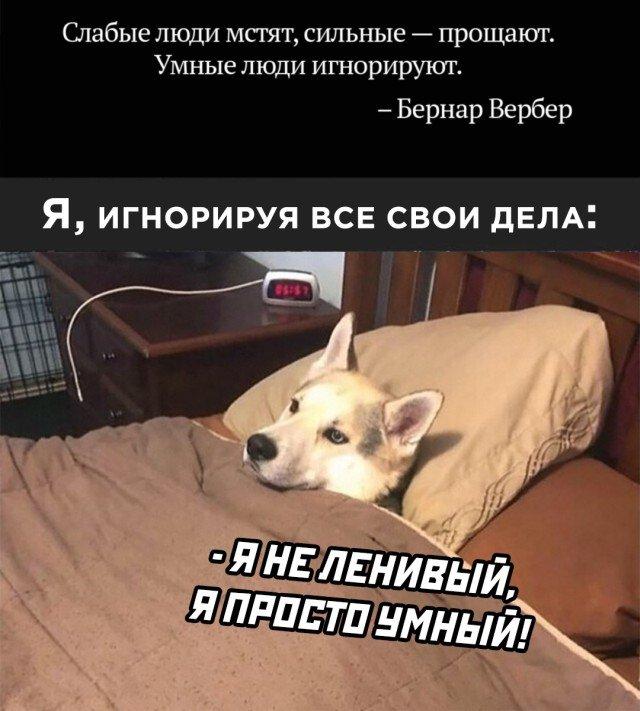 Я совсем не ленивый