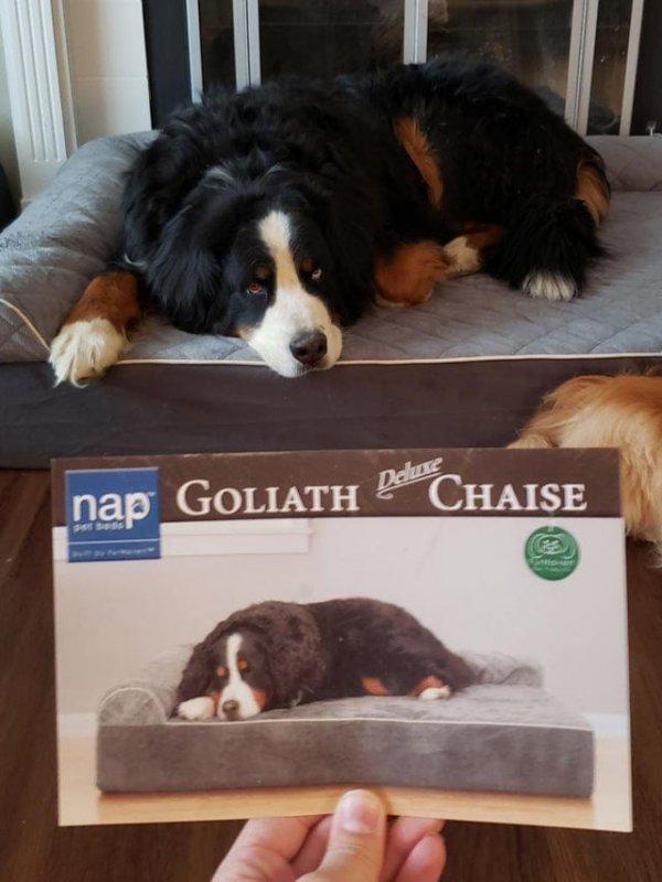 Пес выглядит точно так же, как и собака на упаковке его лежака